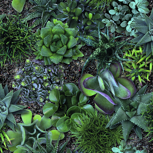 Succulent Greens Wallpaper, , wallpaperIT