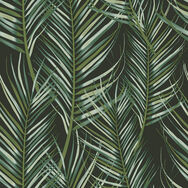 Transform Palm Black Wallpaper, , wallpaperIT